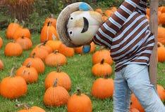 Lighthearted scarecrow på pumpalappen Arkivbild