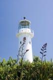 Lighthouse. Oldest lighthouse in New Zealand. Tiri Tiri Matangi Island, New Zealand royalty free stock photo
