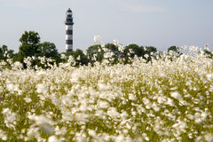 Lighthouse in the Baltic Sea. View from the flowery meadow, natural environment. Royalty Free Stock Images