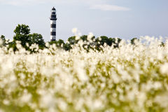 Lighthouse in the Baltic Sea. View from the flowery meadow, natural environment. Stock Photo