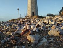 Lighthouse. Beach shells rocks Stock Images