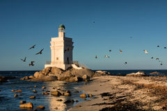 Lighthouse and birds Stock Images