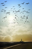 Lighthouse with birds Stock Photo