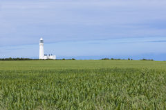 Lighthouse and crops growing at Flamborough Head Stock Photo