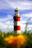 Lighthouse with dandelion, Plymouth, UK Stock Photo