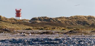 Lighthouse on the dune of Helgoland with seagulls and pebbles Stock Image