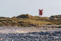 Lighthouse on the dune of Helgoland with seagulls and pebbles Royalty Free Stock Photo