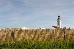 Lighthouse and flock of sheep Royalty Free Stock Photos