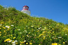 Lighthouse and flowers Royalty Free Stock Images