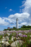 Lighthouse with flowers in foreground. Vertical image of flowers and lighthouse Stock Images