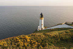 Lighthouse and gorse, Isle of Man Stock Image