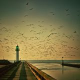 Lighthouse, Gulls, Sky, Seagull Stock Images