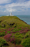 Lighthouse and heather, Pembrokeshire, Royalty Free Stock Photo