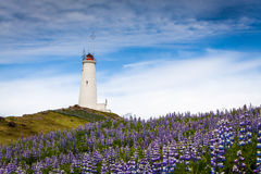 Lighthouse in Iceland Stock Images