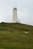 Lighthouse and Icelandic horses, Reykjanes, Iceland Royalty Free Stock Photo