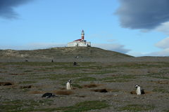 The lighthouse on the island of Magdalena.Magellanic Penguins  at the penguin sanctuary on Magdalena Island in the Strait of Magel Royalty Free Stock Photo