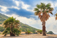 The lighthouse between palm trees in knidos Stock Photo