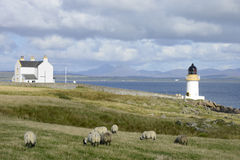 Lighthouse Port Charlotte. Sheep grazing in front of Port Charlotte Islay lighthouse Royalty Free Stock Photo