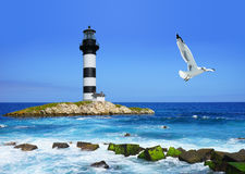 Lighthouse on rocks, sea  coast, flying seagull Royalty Free Stock Images