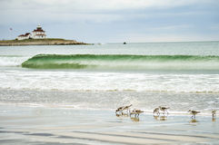 Lighthouse with small wave and birds Stock Image