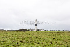 Lighthouse Sylt, Seagulls flying around lighthouse Sylt, Germany royalty free stock images