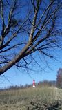 Lighthouse and tree stock photo