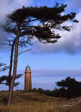 Lighthouse under wind-shaped pine-tree Stock Photo