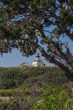 Lighthouse Underneath Tree Stock Image