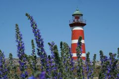 Lighthouse with violet flowers royalty free stock images