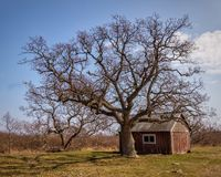Lighthouse watchers cabin and tree. A tree standing next to the lighthouse watchers cabin, near the Långa Jan lighthouse on the Swedish island of Öland royalty free stock photo