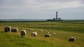 Lighthouse westerhever sheep field Sankt Peter Ording royalty free stock photos