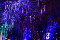 Lighting decoration on trees Royalty Free Stock Images