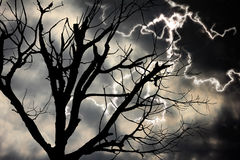Lighting and died tree. In horrible concept Stock Photography