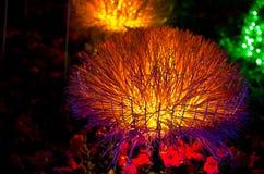 Lighting flower. Colorful lighting flower in the dark royalty free stock photos