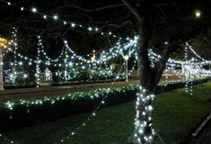 Lighting garlands sprawled on trees and bushes. New Year decoration. Night scene.  royalty free stock image