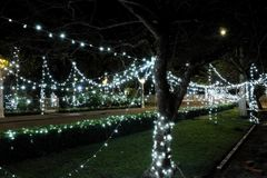 Lighting garlands sprawled on trees and bushes. New Year decoration. Night scene.  stock photos