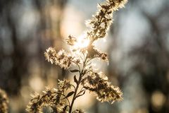 Lighting nature. Gold sunset in some plants Stock Photos