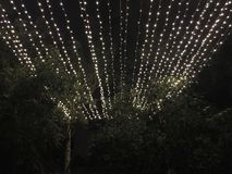 Lighting at night over trees Stock Photography