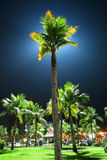 Lighting Palm at the night Stock Image