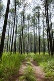 Lighting Tree Trail Royalty Free Stock Photos