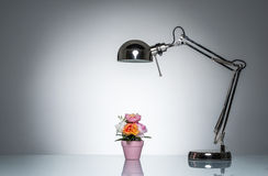 Lighting up pink flower pot with desk lamp. On round studio lighting Royalty Free Stock Photo