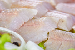 Lightly salted grayling. Fillet of a lightly salted grayling closeup Stock Photos