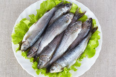 Lightly salted grayling. On a white plate Royalty Free Stock Photo