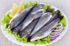 Lightly salted grayling. On a white plate Royalty Free Stock Image