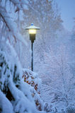 Lightly Snowing. Snow gently falling on a city street light stock photo