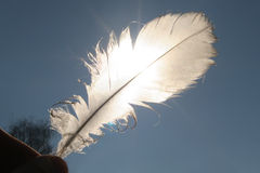 Lightness. White feather held against blue sky Stock Image