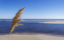 Lightnessen av det blåa havet Royaltyfri Foto