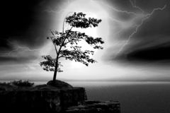 Lightning. Scene tree costing on on background of the lightnings Royalty Free Stock Photography