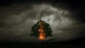Lightning burns tree stock footage