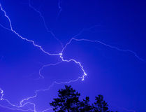 Lightning in the night sky above the treetops Stock Images